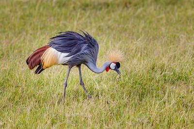 Birds of Africa: Tanzania