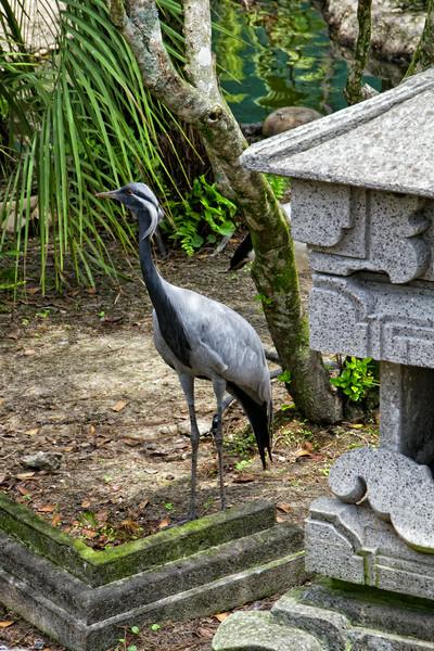 R_Tampa_Zoo-196-Edit.jpg