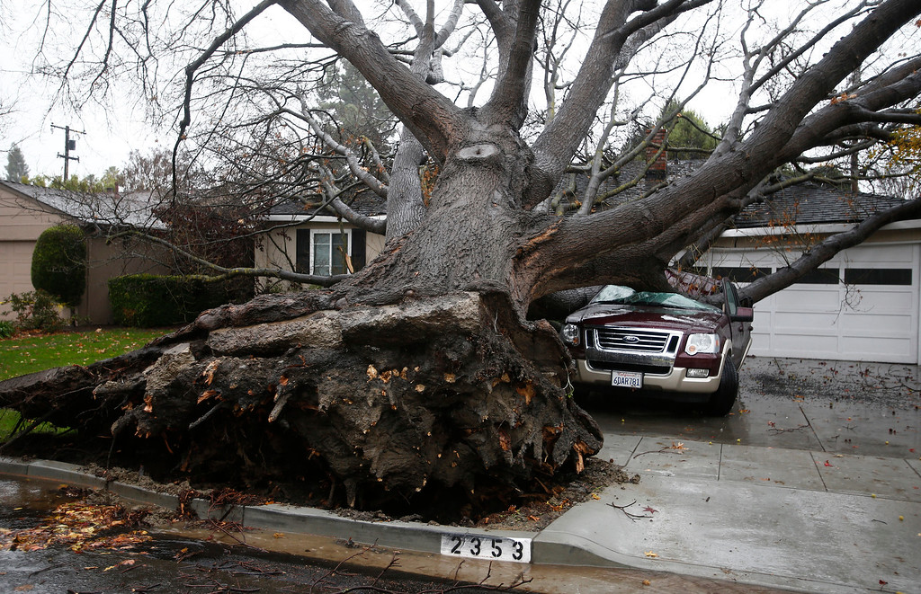 . A large oak tree topples on top of an SUV at a home on Boxwood Drive in San Jose, Calif., on Thursday, Dec. 11, 2014. No injuries were reported. (Gary Reyes/Bay Area News Group)