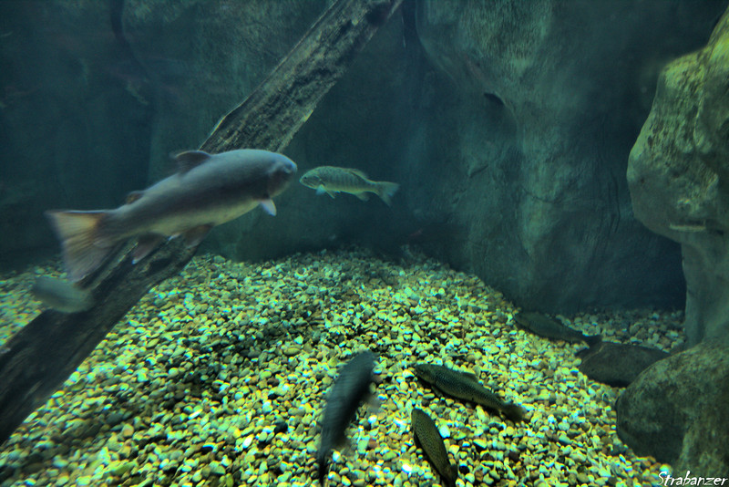 Tennessee Aquarium