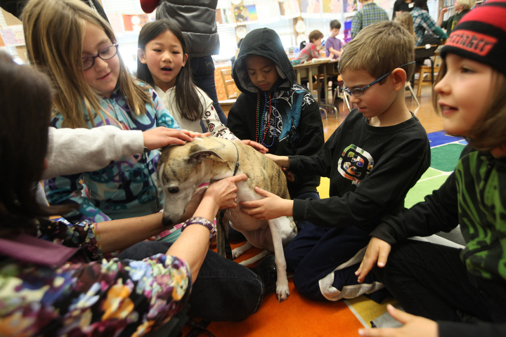 """. Left to right, Ella Wismer, Elizabeth Cho, Tydus Ly, Toby Yegian, and Luke Verre all in  Sylviane Cohn\'s 2nd/3rd grade class give affection and attention to Ziti, a whippet from the P.A.L.S. program, at Joaquin Miller Elementary School in Oakland, Calif. on Feb. 15, 2013. Anya Pamplona, a Humane Advocate, brought Larry, a shelter cat, and invited Ziti to the class to meet the students as part of the \""""Drive to Thrive\"""" program. (Laura A. Oda/Staff"""