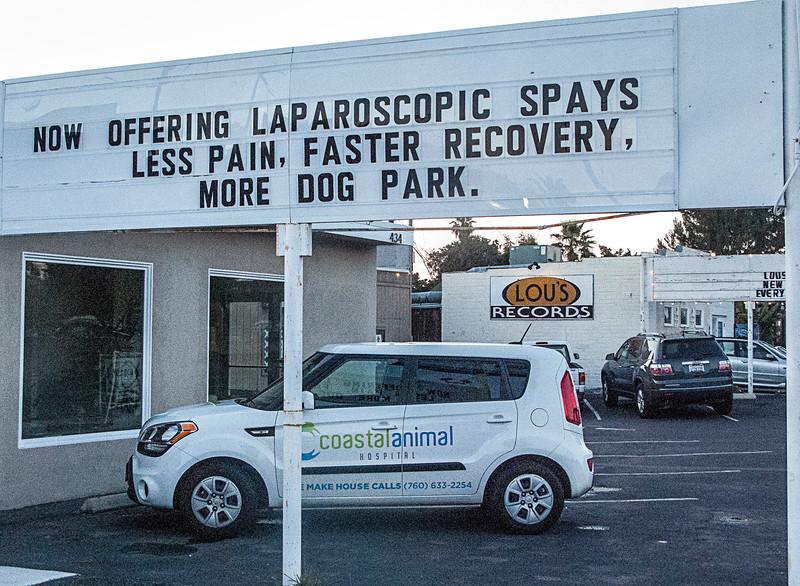 more dog park.jpg
