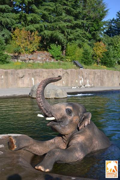 Anzelina-Coodey_Solstice-Run-Oregon-Zoo_008.jpg