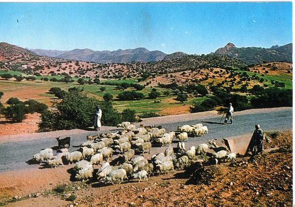 019_Maroc_Typique_Le_berger_et_ses_Moutons.jpg
