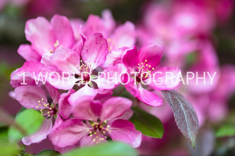 201905152019 Neighborhood Blossoms008--147.jpg