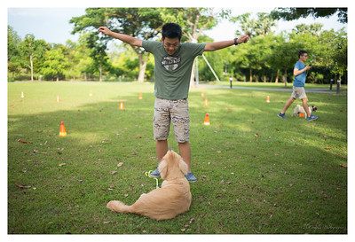 Obedience Class Week 4 - 17 Jun 2017