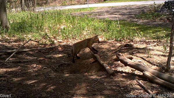 Fox Den near Lake Moraine