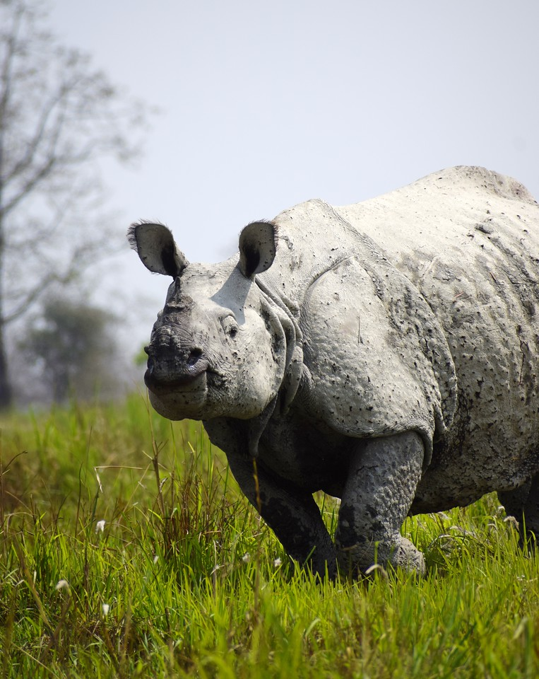 UNESCO World Heritage Sites in India: Kaziranga