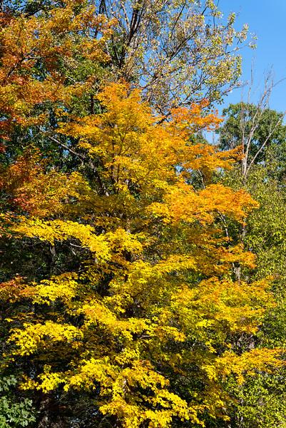 queen esther-foliage-2015-2.jpg