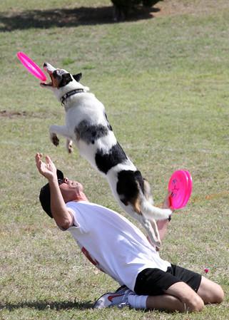 Disc Dog OK Paws Spring Fling 05-07-2011
