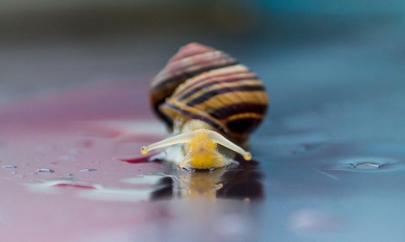 snail sept 2018 (1 of 1).jpg