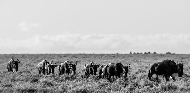 Tanzania_Feb_2018-466.jpg