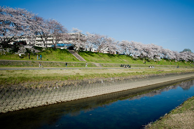 Korakuen, Okayama Castle - April 8, 2010
