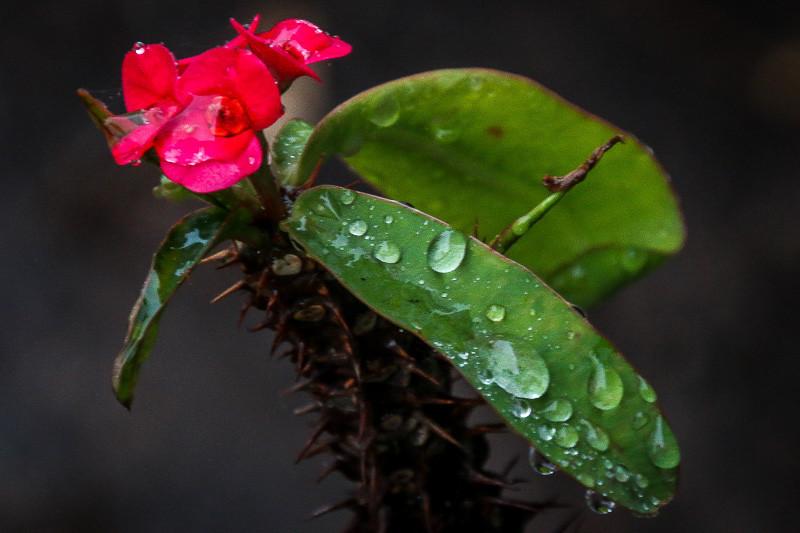 February 6 - Raindrops.jpg