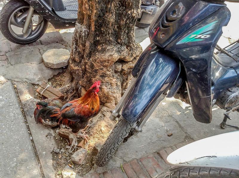 Hanoi14.jpg