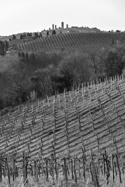 Vineyard - San Gimignano, Siena, Italy - March 26, 2016