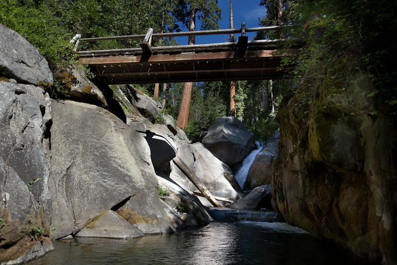 Sequoia_0455.jpg