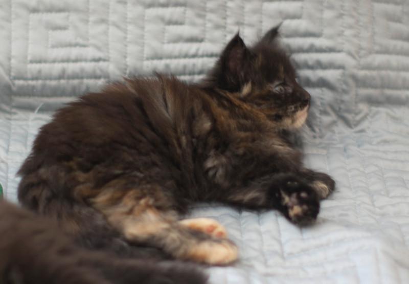 Kittens308.jpg