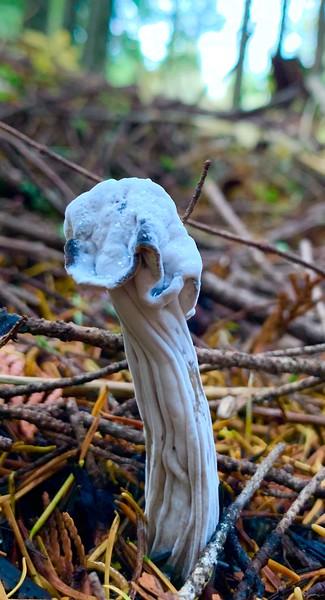 Gorge Mushrooms