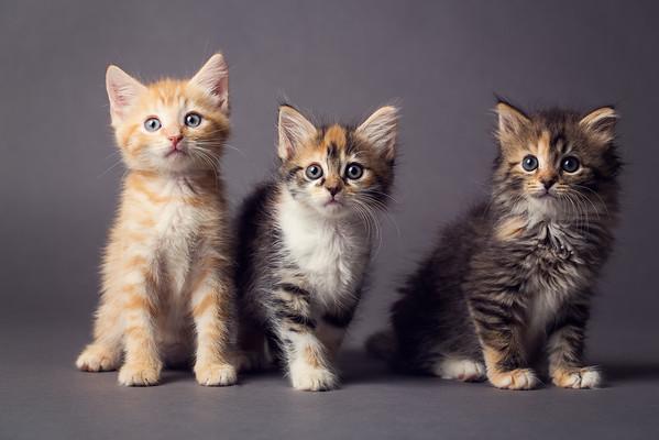 Cam's Kittens