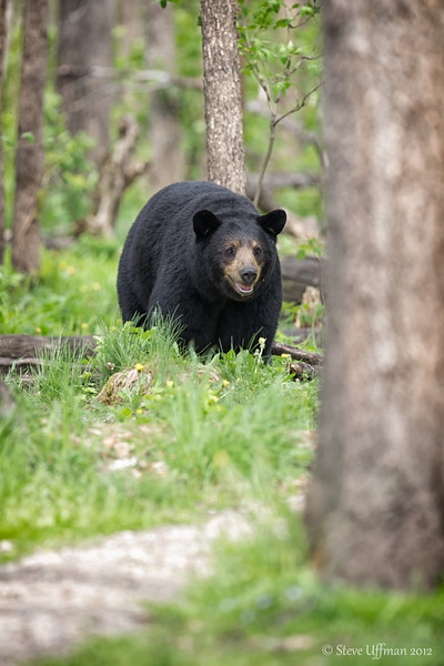 20120519-_Q2C6344Black_Bears-Edit.jpg