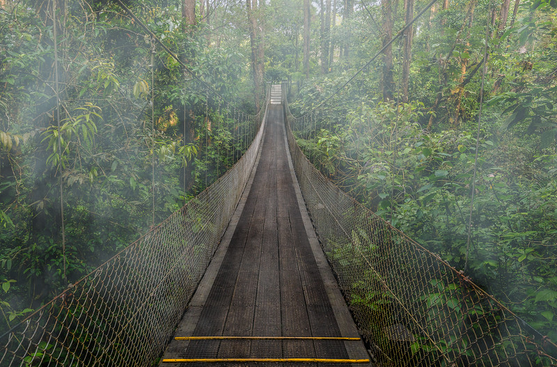 Hanging Bridge - Costa Rica