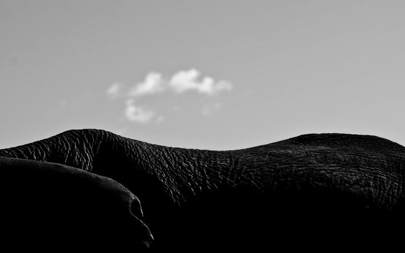 elephant environmental project