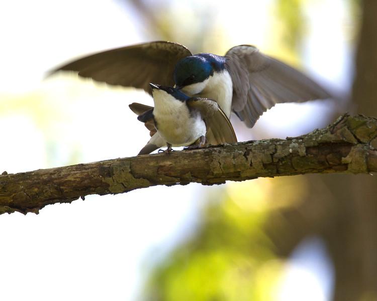 sparrowmate-1-2012.jpg