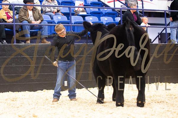 Steer Show