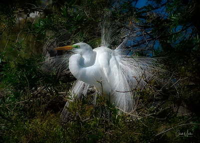Florida Birds and Wildlife