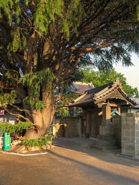 Sakuragicho. Tokyo