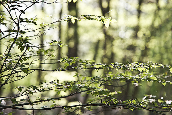 Forêt Mesnil Saint Père