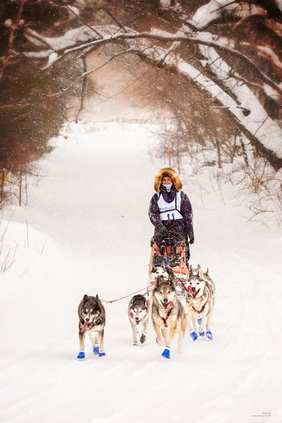 WolfTrack Sled Dog Race 2019