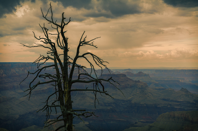 Grand Canyon_Tree-.jpg