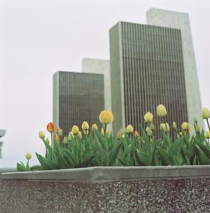 Empire State Plaza Color