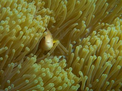 Mtwara Reef