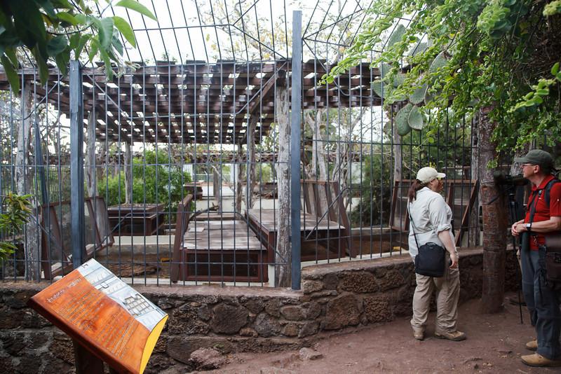 Galapagos Tortoise nursery at Charles Darwin Research Station, Santa Cruz, Galapagos, Ecuador (11-20-2011) - 573.jpg