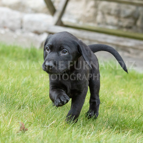 Weika Puppies 24 March 2019-6442.jpg
