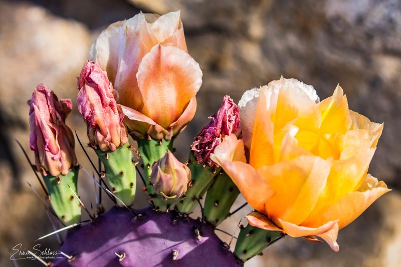 Botanical Gardens 4-15-2018b-7031.jpg