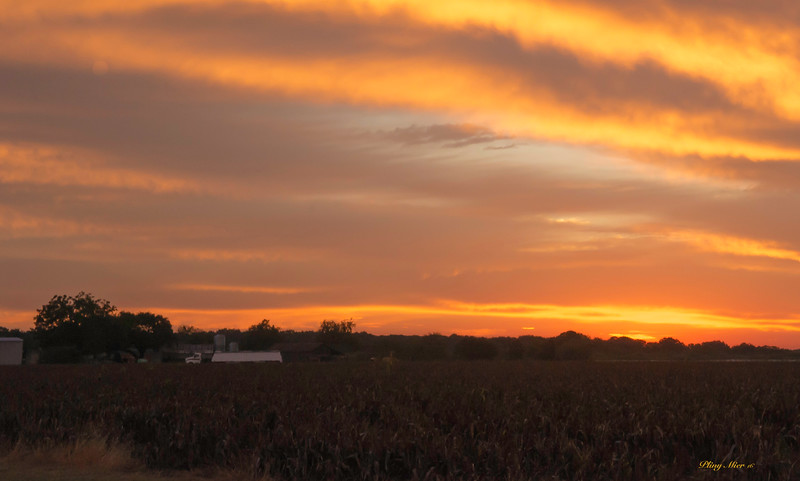 Sunrise on the Farm - Schertz, TX