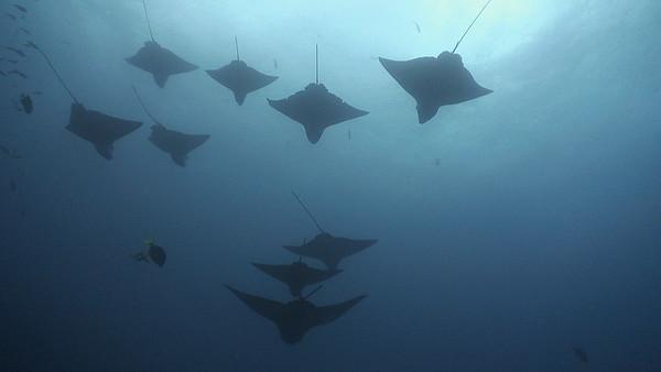 2011 Galapagos Kids Sea Camp Aggressor
