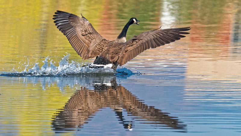 020040 Goose Landing 0120 16x9.jpg