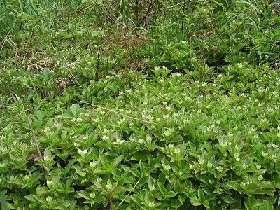 Plants in Gaspé, Québec
