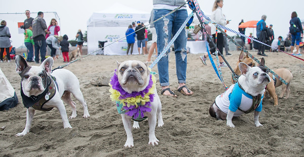 Nor Cal Surfing Dog Competition