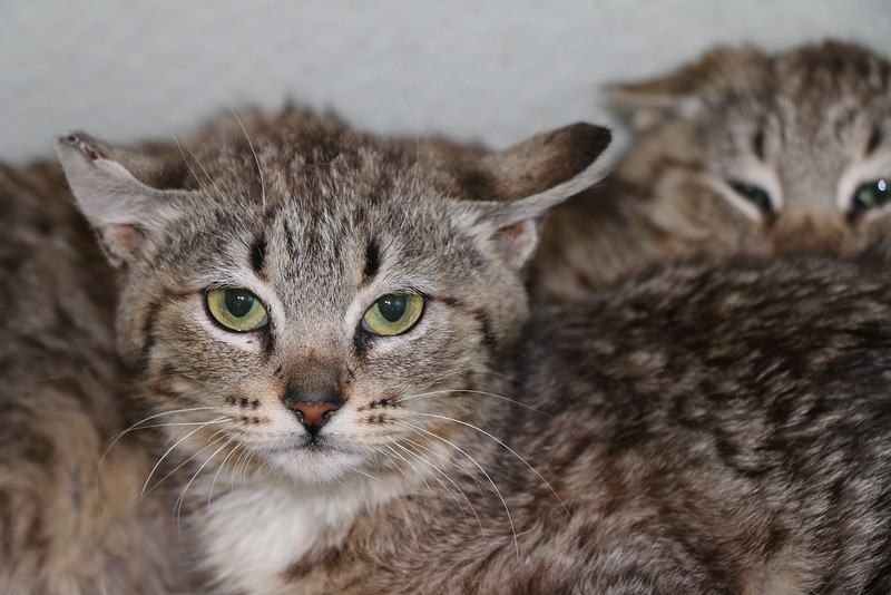 Feral kittens - 0323015 - 4.JPG