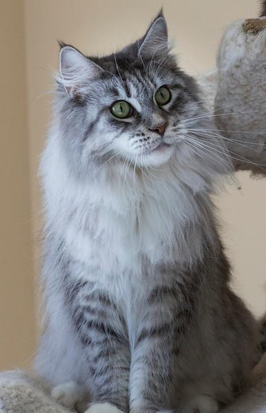 Kittens239.jpg