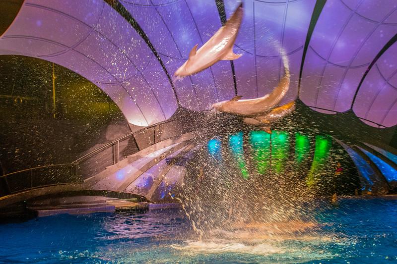 GA Aquarium with Linc, Ali & Abe-113.jpg