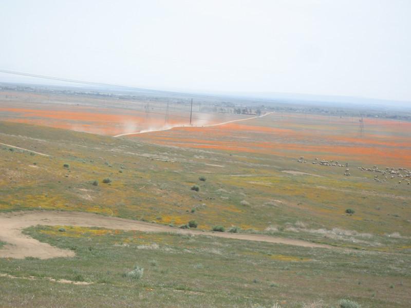 CDSR April 8, 2008
