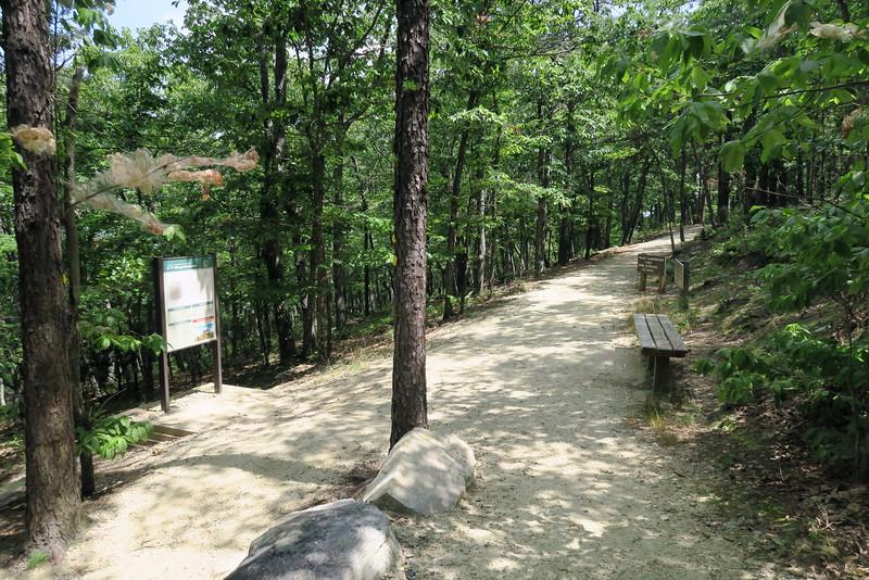 Mountain-Ledge Spring Trail Junction
