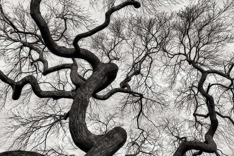 branches, Green-Wood cemetery